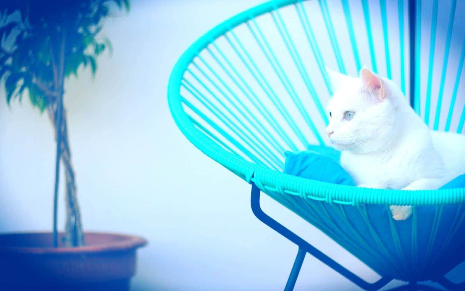 Condesa turquoise cat Fair Furniture